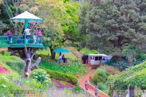 ooty-sightseeing
